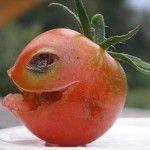 width=-vive-la-tomatina-vive-la-tomatina